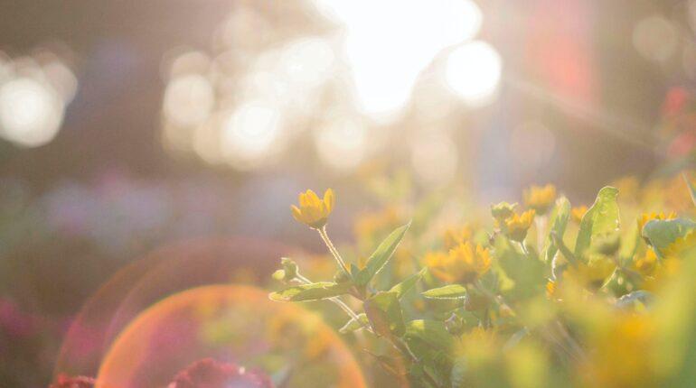 tavasz nap virág