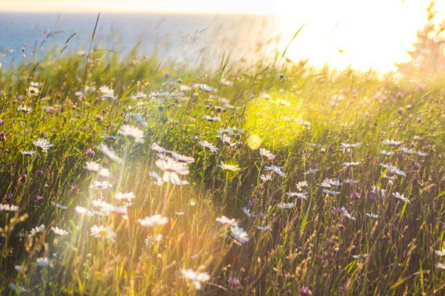 időjárás napos rét tavasz meleg