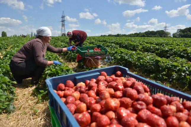 Ukraine agrárium