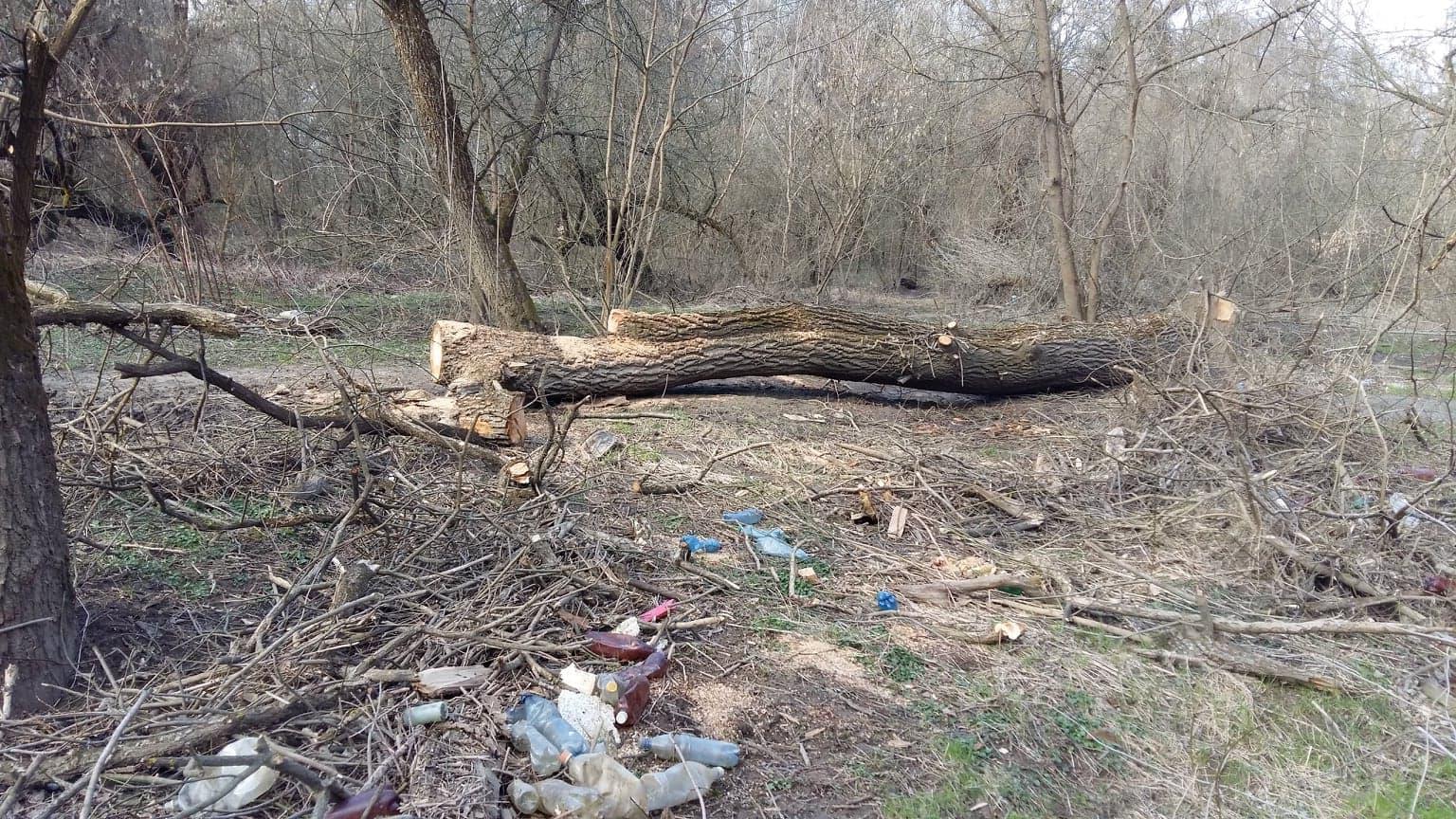 A Tisza partján lévő szemétnél már csak az szomorúbb, hogy erősen működik az illegális fakivágás is…